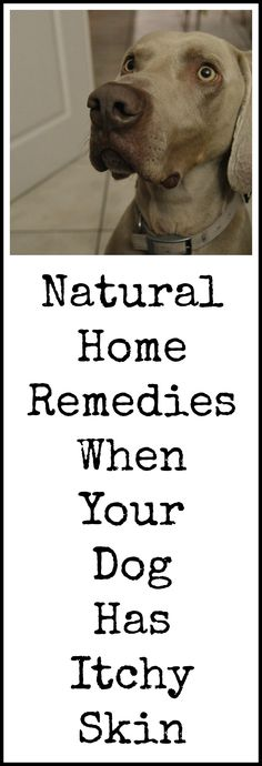 Natural remedies for dog's itchy skin.