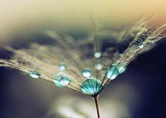 Hydria Pot design inspiration Via: Squirrelondope Water Droplets, Clay Pots, Dandelion, Design Inspiration, Flowers, Plants, Beautiful, Wall, Water Drops