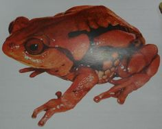 Over one-fifth of India's frogs under threat