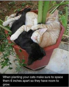 How to grow a kitten...