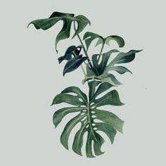 APR | Foliage | Watercolour motif by Louise Jones