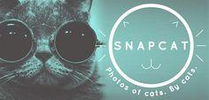 В google play появилось приложение для котов, и как утверждается на официальном сайте, разработанное самими котами. Позволяет фотографироваться вашим питомцам и отправляет фото в соц.сети.