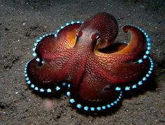 glowing octopus