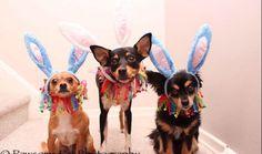 The cutest bunnies