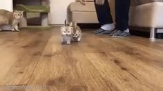 Kittens Headed to the Kitchen