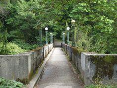Arboretum Seattle | ... Park Arboretum – Seattle Things to Do #57 | findwell Seattle