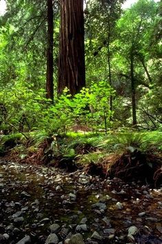 Muir Woods, Marin, CA