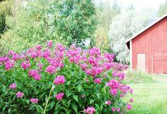 Valkoisen Talon Tarina: Mummolan puutarhassa...