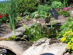 Small garden pond & plants
