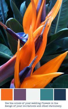 bird of paradise invitations   birds of paradise - wedding flower