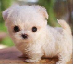 Es un perrito muy bonito y es un bebe