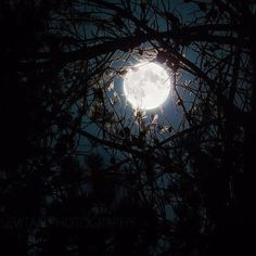 Last night's Harvest Moon taken in the forest of central Oregon U.S.A    Image Credit : Chris Leviton