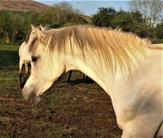 Beautiful Show Mare - In Foal for 2020 ! Horse Names, Horses For Sale, Borneo, Beautiful Babies, Equestrian, Horseback Riding, Show Jumping, Equestrian Problems