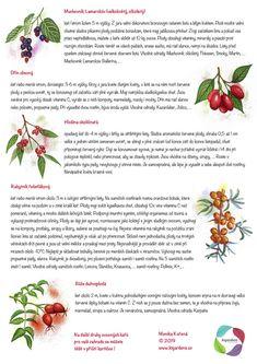 Growing Plants, Indoor Plants, Flora, Gardens, Ideas, Inside Plants, Outdoor Gardens, Plants, Thoughts