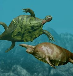 Odontochelys - The oldest turtle fossils, they only have the bottom part of the shell.  There is debate as to whether they had not yet evolved the top shell, or if they were descended from even older turtles that lived on land, and lost it when moving to the water, like the modern Leatherback.