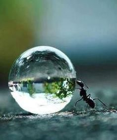 Ant pushing a water droplet. Such beautiful photography. Cool Pictures, Cool Photos, Beautiful Pictures, Amazing Photos, Animal Pictures, Macro Photography, Amazing Photography, Urban Photography, Animals Tattoo