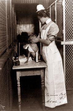 vintage everyday: Dogs in Retro Photos