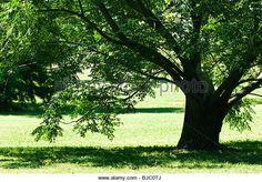Shade Tree Stock Photos & Shade Tree Stock Images - Alamy