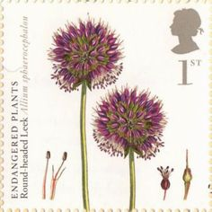 Endangered Plants and Anniversary of Kew Gardens Stamp Round-Headed Leek