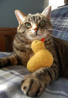 Rubber Ducky Cat Toy  Hand Knit Wool Felted Cat by CattitudeCatToy