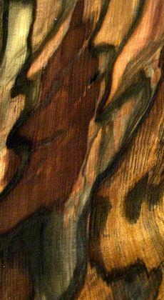 Tasmanian Blackhearted Sassafras-  incredible wood grain!!