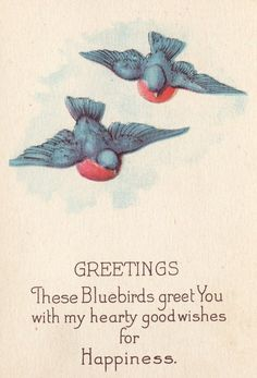 Bluebirds on vintage greeting card