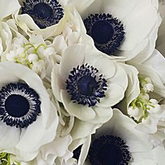 @Carol Schuette: these were the flowers i was trying to think of the other day that are like poppies!