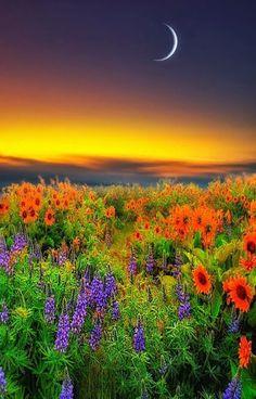 Beautiful Pictures Amazing