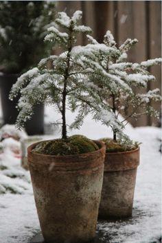 The Easiest Winter Vegetables To Grow Christmas Morning, Christmas And New Year, Winter Christmas, Christmas Time, Xmas, Winter Snow, Winter Time, Winter Season, Winter Cabin