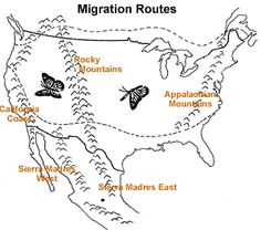 Cycle 2 Week 5 Science. Illustration of U.S. migration map answers
