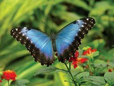 Blooms & Butterflies in Franklin Park Conservatory & Botanical Garden