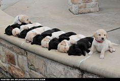 adorable-sleeping-puppies