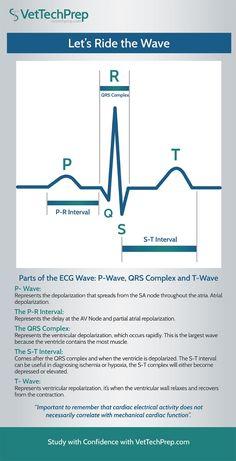 Infographic: Parts of the ECG Wave - Nursing Meme - Infographic: Parts of the ECG Wave Vet Tech Student, Nursing Students, Student Memes, Medical Students, Pharmacology Nursing, Icu Nursing, Funny Nursing, Nursing Tips, Nclex