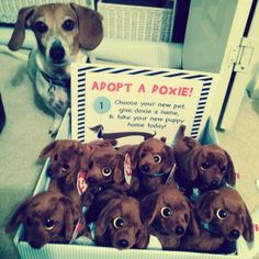 Adopt a doxie! Adopt a dachshund! Cute party favors for our dog themed party :)