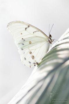earthlynation: Butterfly by Astrid Carnin