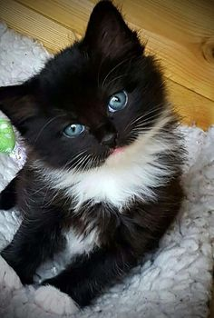 Have had a lot of black and white cats in my lifetime. All were real sweet with a lot of character. And  their own special personalities.