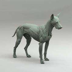 Canine Anatomy Study, steve lord on ArtStation at http://www.artstation.com/artwork/canine-study-2 ★ Find more at http://www.pinterest.com/competing