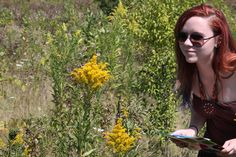 Bee Lab - Anna is observing pollinator visits.