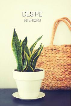 DESIRE INTERIORS | дизайн интерьера.  2 ВАРИАНТА ПЛАНИРОВКИ И 3D-ВИЗУАЛИЗАЦИЯ БЕСПЛАТНО  на: http://desireinteriors.ru/