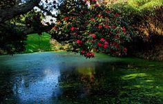 The lost gardens of Heligan,V.K