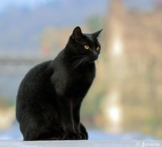 A black cat brings good luck ? by Jarmi7d, via Flickr