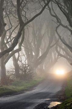 Fog, Road, Tangled, Trees, Nature, Landscape