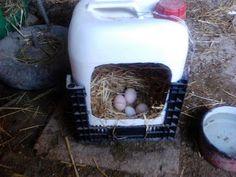 CONSTRÚYELO YA: Construir ponedero para gallinas casero