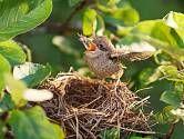 obrázek z archivu ireceptar.cz Bird, Animals, Animais, Animales, Animaux, Birds, Animal, Dieren, Birdwatching