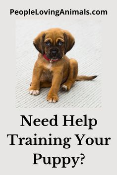 Doggy Dan's Perfect Puppy Program is the best puppy training for your puppy. It's effective and affordable. Puppy Training, Dog Training