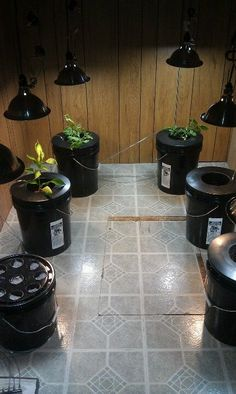 Indoor hydroponic gardening....tomatoes, peppers, cucumbers, lettuce and spinach