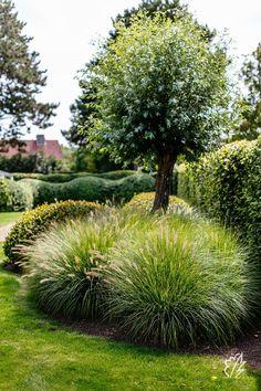 Garden Deco, Love Garden, Dream Garden, Garden Landscape Design, Front Yard Landscaping, Garden Planning, Garden Inspiration, Land Scape, Beautiful Gardens