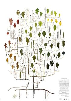 """""""These wonderful delicate posters are created by Lotta Olsson using collected leaves,twigs, flowers and roots scanned and arranged in these tree like forms that are strangely scientific in their clean beautiful design, order andclassification."""""""