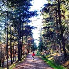 Spring is the perfect time to explore Canberra's walking and bike trails. Thanks to Instagrammer ceebee_images for sharing this photo and tagging #visitcanberra