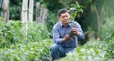 Un agricultor comprueba UTZ Certified planta de café